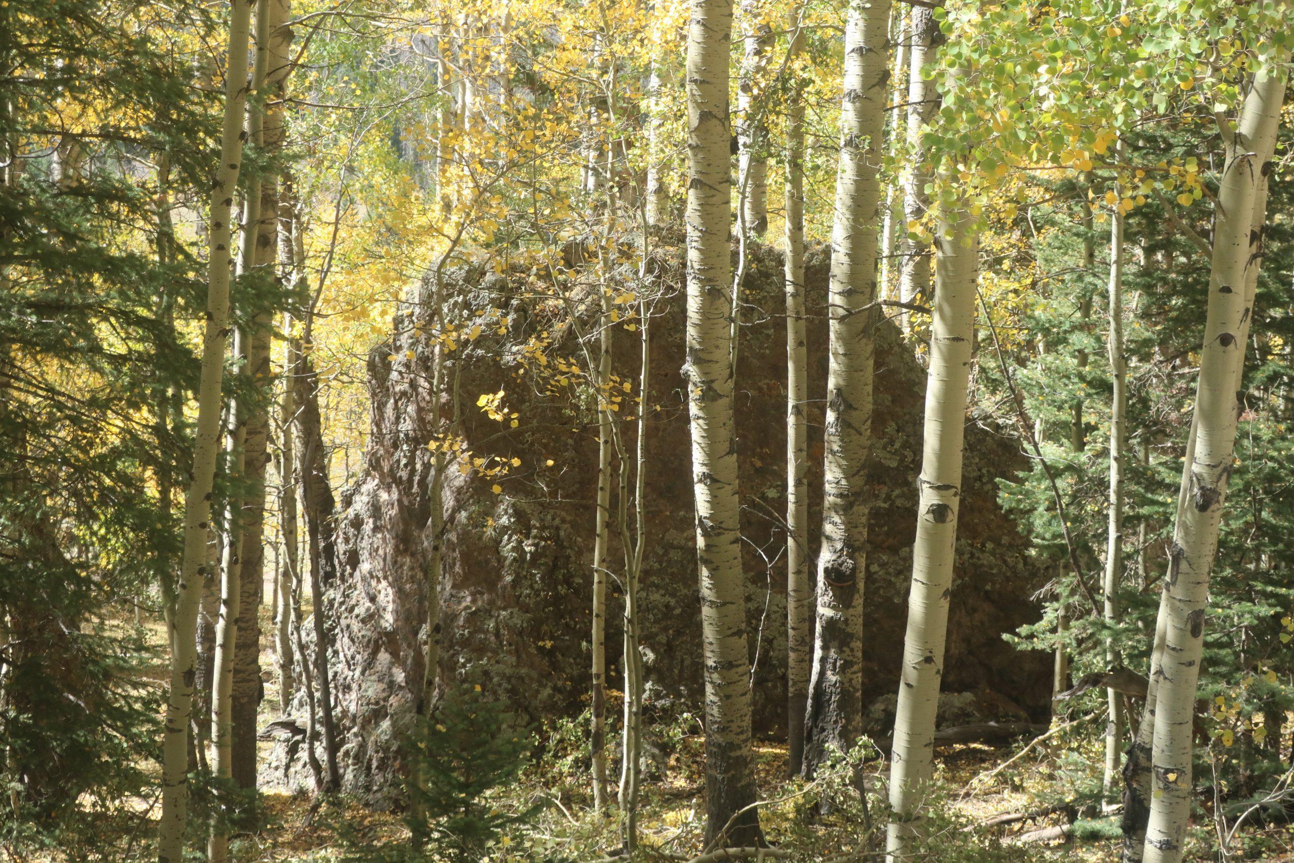 Large rock in aspen forest